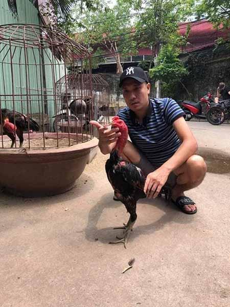 Cách chọn gà đòn đá hay qua dáng vẻ của gà.