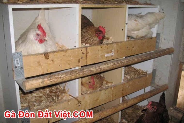 Chuồng gà đẻ trứng 2 tầng tự làm tại nhà