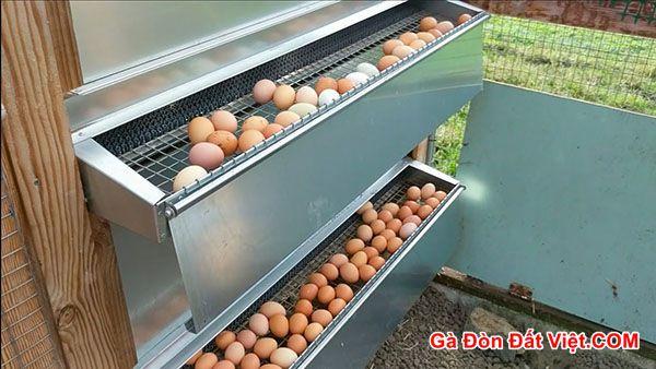 Cách làm chuồng gà đẻ trứng có khay hứng trứng rất hiện đại. Có luôn mái che tránh nắng mưa cho gà mái.