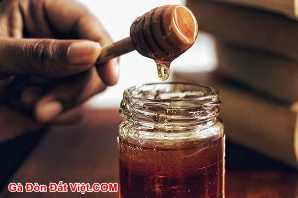 Cho gà uống mật ong hàng ngày tăng cường sức khoẻ cho gà