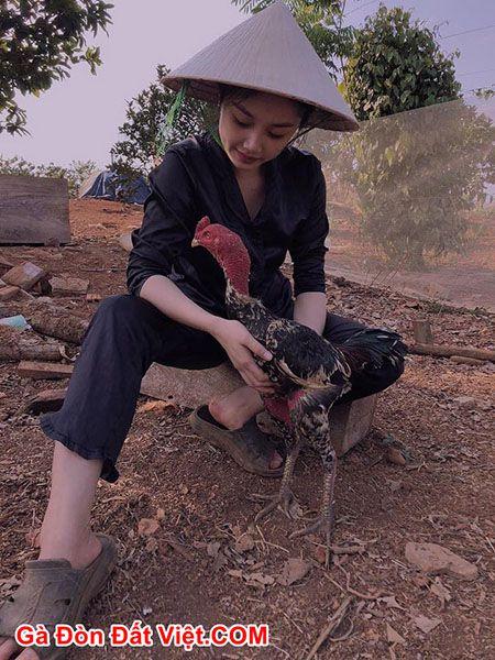 Khi giao chiến gà nên được vệ sinh sạch sẽ, vỗ dãi cẩn thận để tránh gà bị hen hoặc bị khò khè.