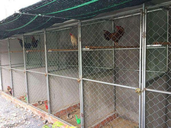 Mẫu chuồng gà đẹp bằng lưới B40